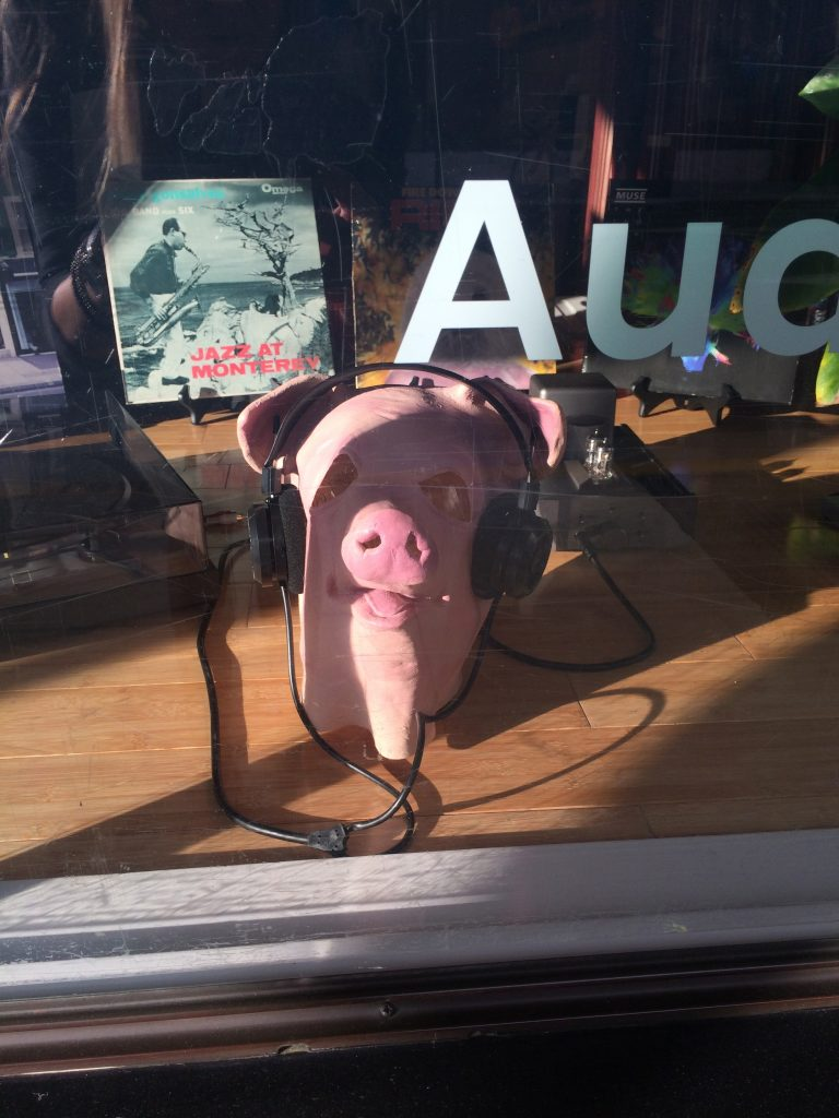 pig wearing headphones